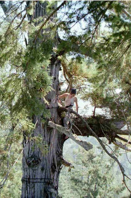 """Sunsong in tree-sit """"..."""