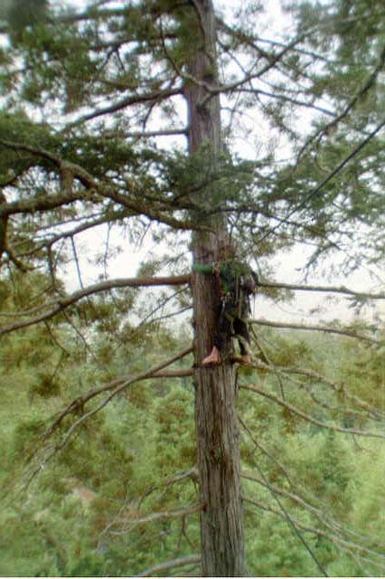 13 Women Reclaim Redwoods...