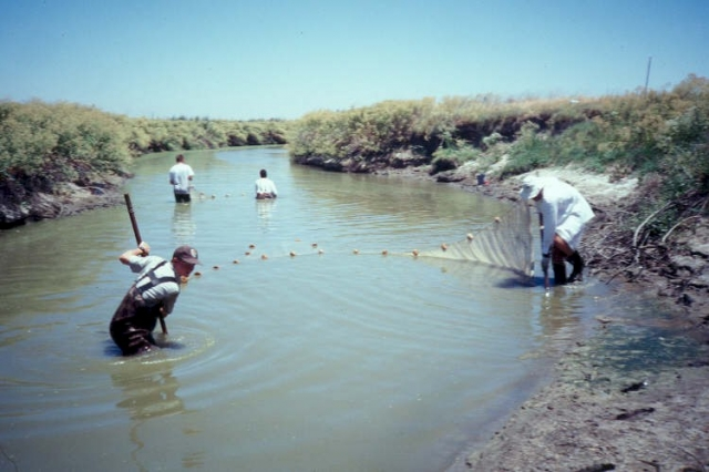 640_seining_for_fish_on_mud_slough_1.jpg
