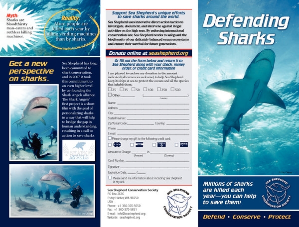 media_080903_1_shark_brochure_english.pdf_600_.jpg