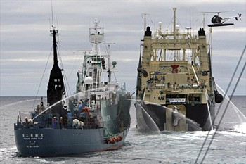 news_090205_2_1_whaling_opponents_collide_at_sea.jpg