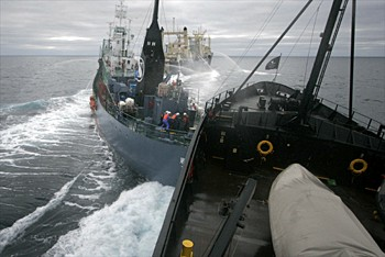 news_090205_2_3_whaling_opponents_collide_at_sea.jpg