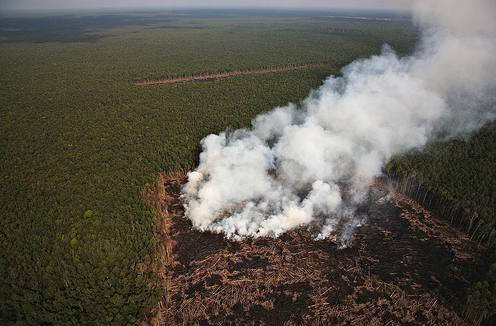 Photo: Greenpeace. Smoke from man made forest fires in the RAPP concession in Giam Siak Kecil area to clear land for palm oil plantations.