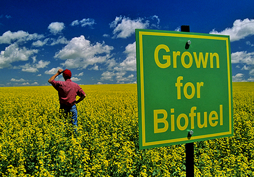 grown-biofuel_1.jpg