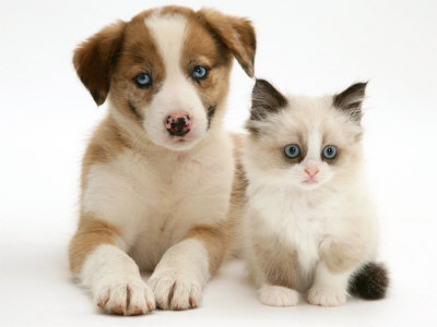 PetSmart Charities® Adoption Centers — in more than 1, PetSmart® stores — provide a clean, quiet and convenient place to get to know your new furry friend. The centers feature adorable cats and dogs from local animal welfare groups.