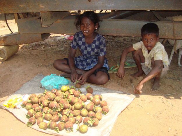 children_selling_a_kind_of_fruit__local_medicine__for_the_treatment_of_diarrhoea.jpg