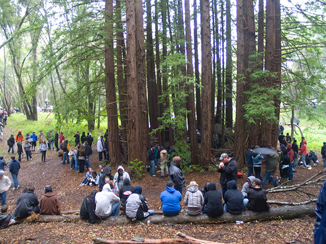 redwood-rings_4-20-11.jpg