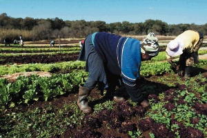 south_africa___black_agriculture.jpg