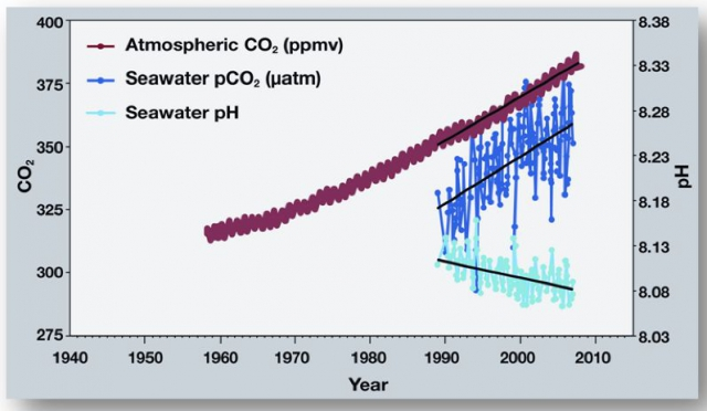 640_noaa_co2_in_atmosphere_seawater_and_ocean_ph.jpg