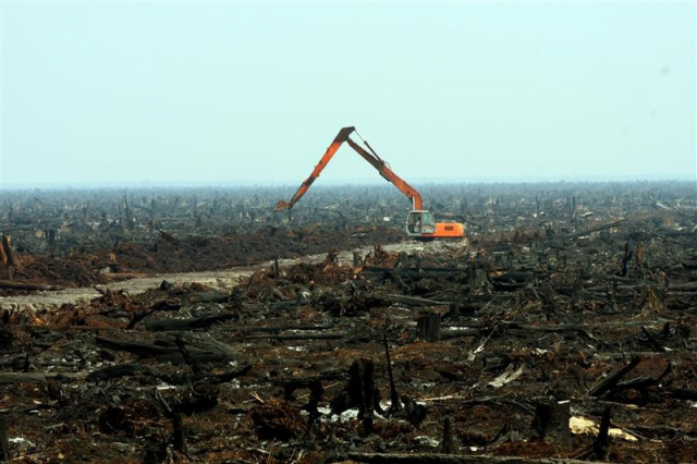 640_nigerian_rain_forest_destroyed.jpg original image ( 800x533)