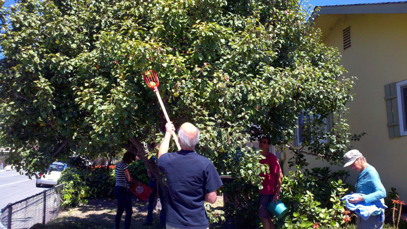 santa-cruz-fruit-tree-project_1_8-26-12.jpg