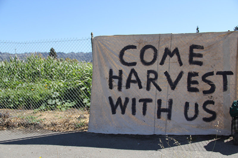 occupythefarm-harvest5_20120909_002.jpg