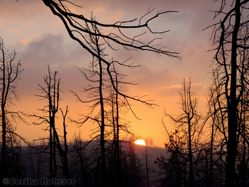 800_angeles_national_forest_september_11__2012_photo_by_corina_roberts_23106.jpg