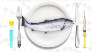 genetically-engineered-salmon-300x171.png