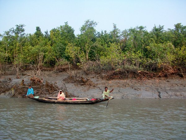 sundarbans_mangroves6___wildteam.jpg