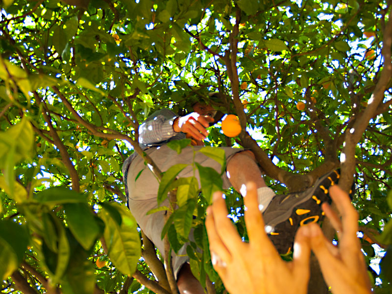 fruit-tree-project_4_4-21-13.jpg