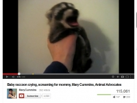 200_mary_cummins_makes_a_baby_raccoon_scream.jpg original image ( 869x686)