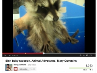 200_mary_cummins_makes_a_dying_baby_raccoon_suffer_to_be_filmed.jpg original image ( 867x662)
