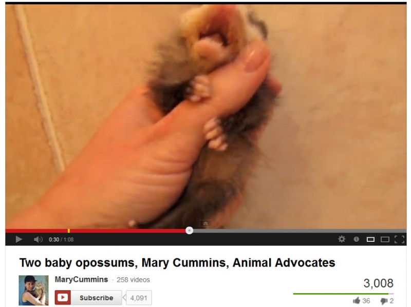800_mary_cummins_make_baby_possum_cry.jpg original image ( 855x641)