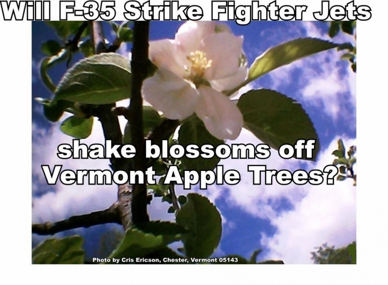 800_apple_blossom.jpg