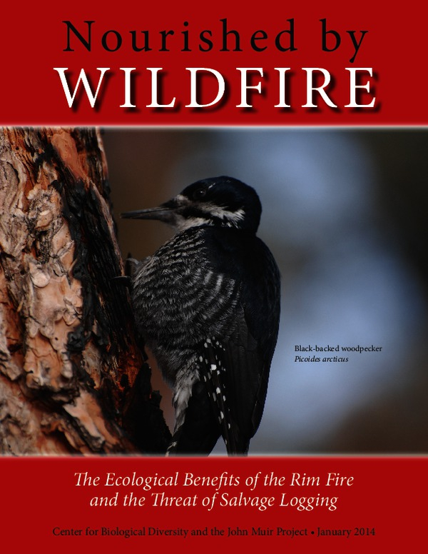 nourished_by_wildfire_rim_fire_report.pdf_600_.jpg