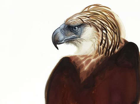 great_philippine_eagle_painting_by_david_tomb.png