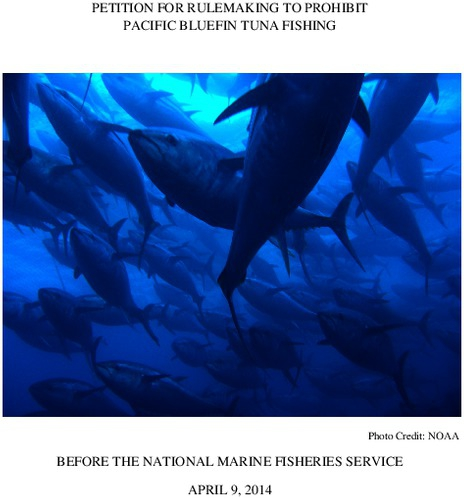 petition_for_rulemaking_to_end_pacific_bluefin_tuna_fishing.pdf_600_.jpg
