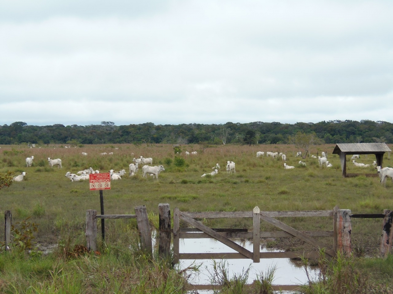 800_08__cattle_ranch_in_amazonas_state.jpg