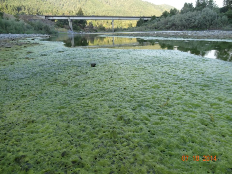800_toxic_algae_on_the_klamath_river__.jpg original image (960x720)