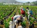 120_pesticide_use_palm_oil_ecuador.jpg