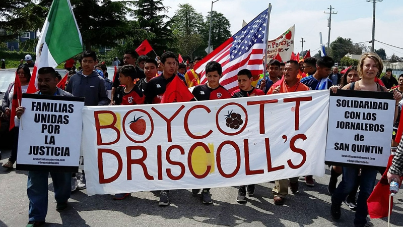 ufw tries to silence boycott driscoll u2019s activists at cesar