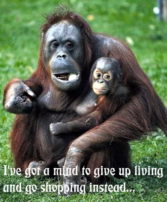 800_ask_orangutans_to_give_up_living_and.jpg