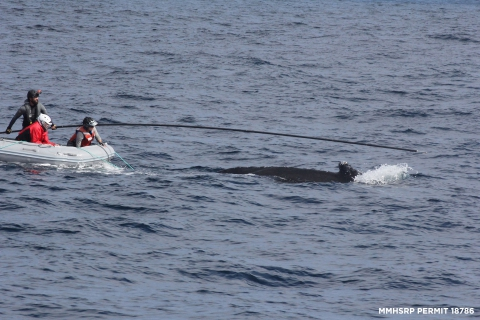 480_humpback_california_whale_rescue_moss_landing_4.jpg