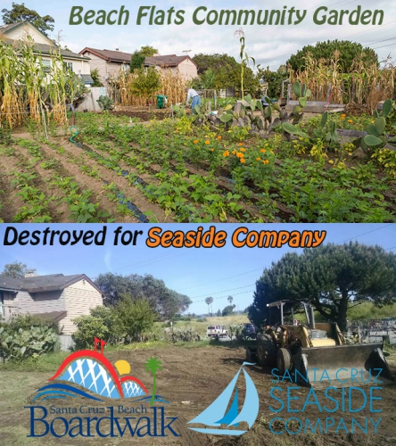 800_beach-flats-community-garden-mar-24-2016-vs-sep-2015.jpg