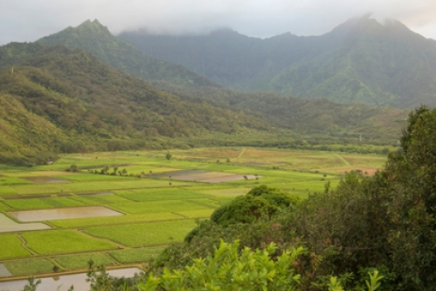 480_hawaii-farms_1.jpg original image (488x272)