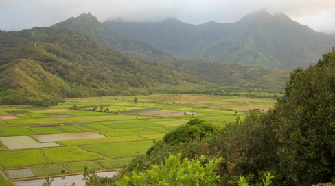 Hawaii Legislature Provides Landmark State-Funded Tax Credit Supporting Organic Farmers