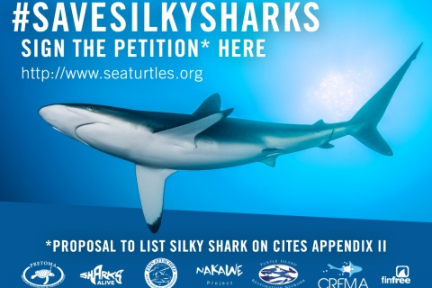 480_silkysharkpetition_en_072516.jpg