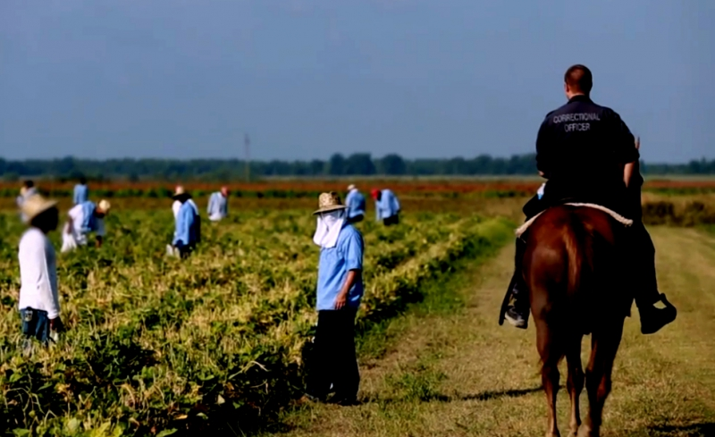 sm_correctional-officer-horse-field.jpg