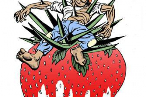480_farmworker_on_strawberry_killed_graphic_1.jpg