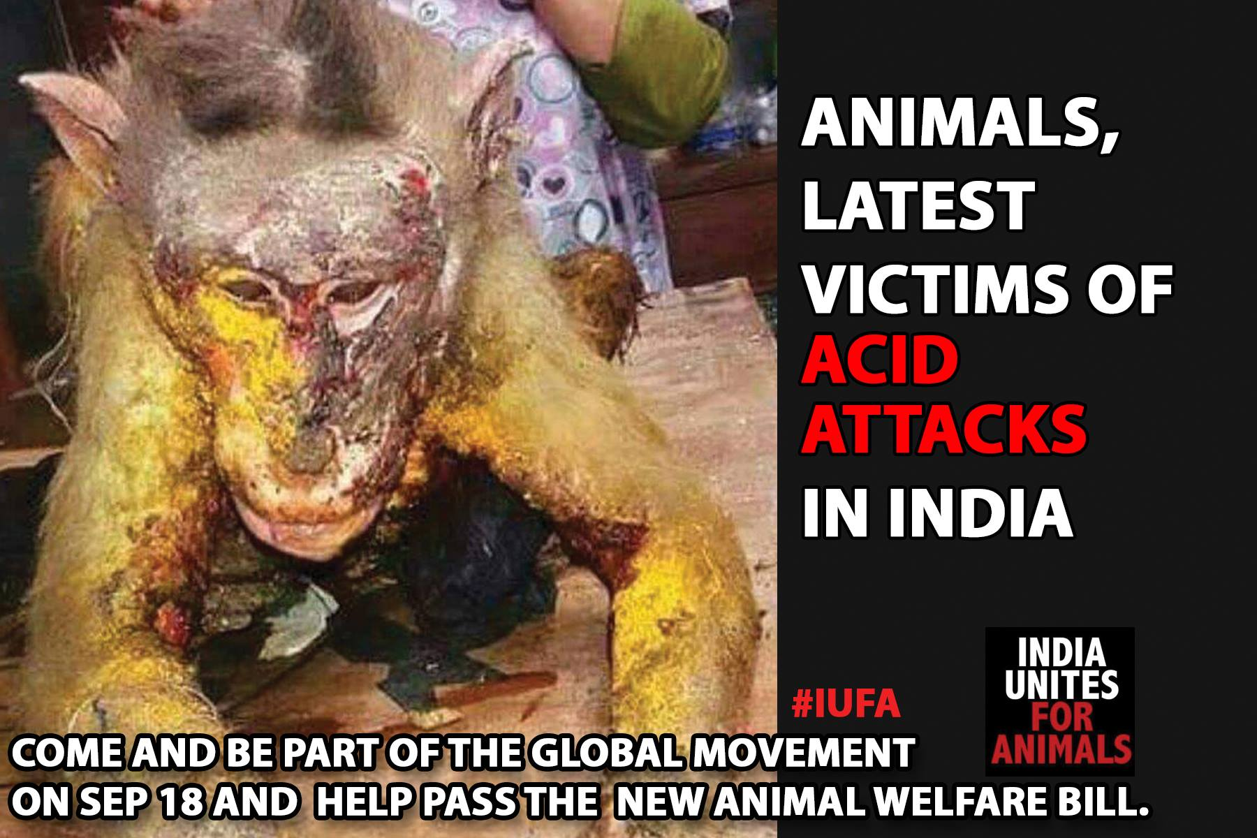 animal rights india Animal welfare and rights in india regards the treatment of and laws concerning non-human animals in india it is distinct from animal conservation in india india is home to several.