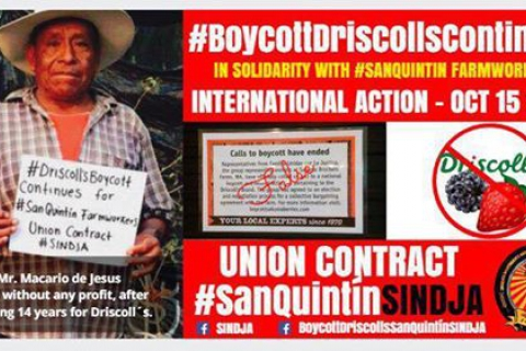 480_boycott_driscolls_continues_international_action_october_15_2016_1_1.jpg