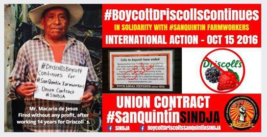 boycott_driscolls_continues_international_action_october_15_2016_1.jpg