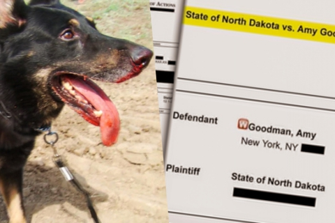 480_north_dakota_dogs_1.jpg