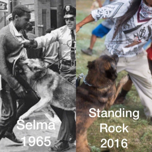 sm_north_dakota_dogs_and_selma_dogs.jpg