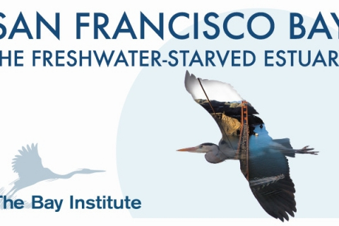 480_freshwater_starved_estuary_cover.jpg