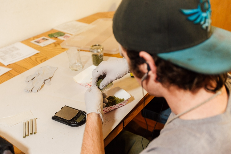 sm_steef-fleur-photo-rolling-joints-wamm-santa-cruz.jpeg