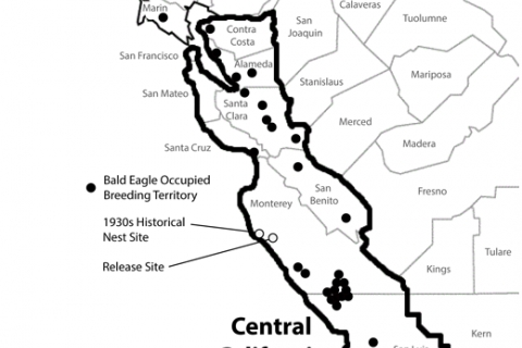 480_central_california_bald_eagle_management_zone.jpg