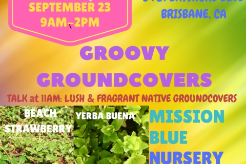 480_mbn_plant_sale_9.23.17_groovy_groundcovers_.jpg