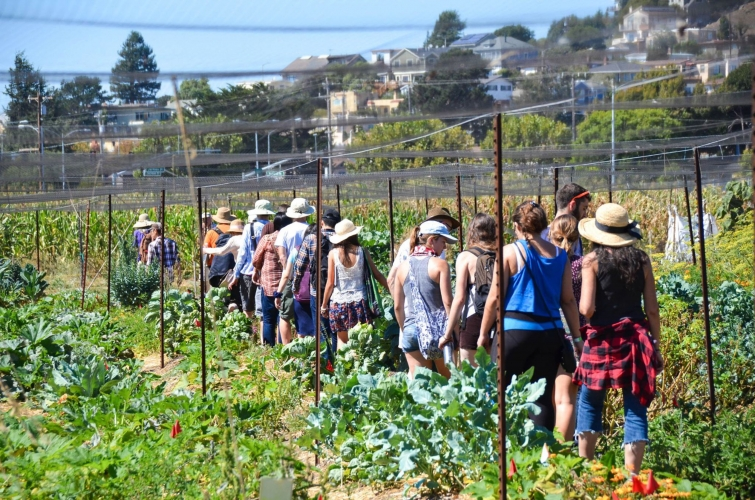 Open Hours at UC Gill Tract Community Farm @ Gill Tract | Albany | California | United States