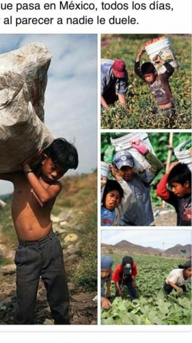 sm_mexico_driscolls_child_labor_photos.jpg